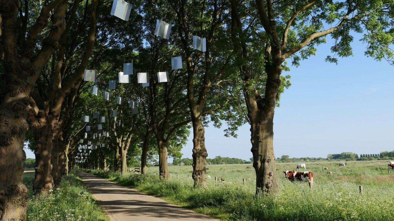 Kunst aan de Maas 2015 1